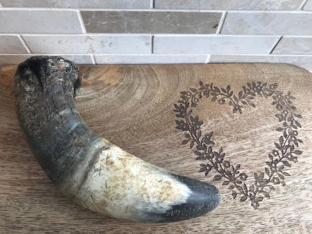 Buffalo Horn – Medium