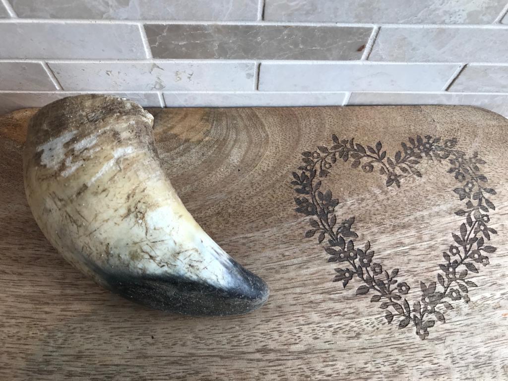 Buffalo Horn – Small