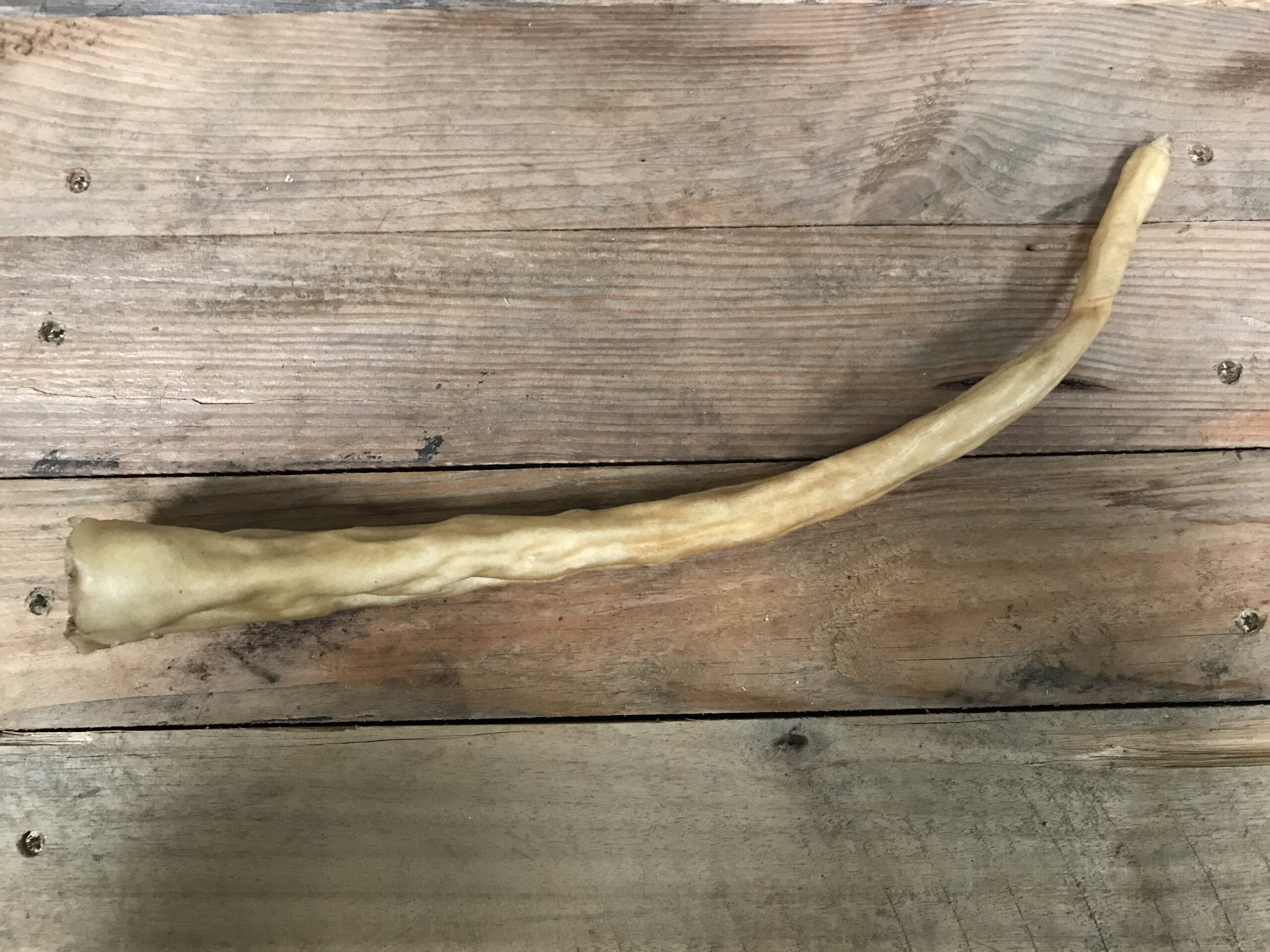 Buffalo Tail – 1pc